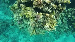 Snorkeling. Reefs Hilton Sharks bay. Red sea. Egypt