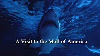 [E6] A visit to the Mall of America